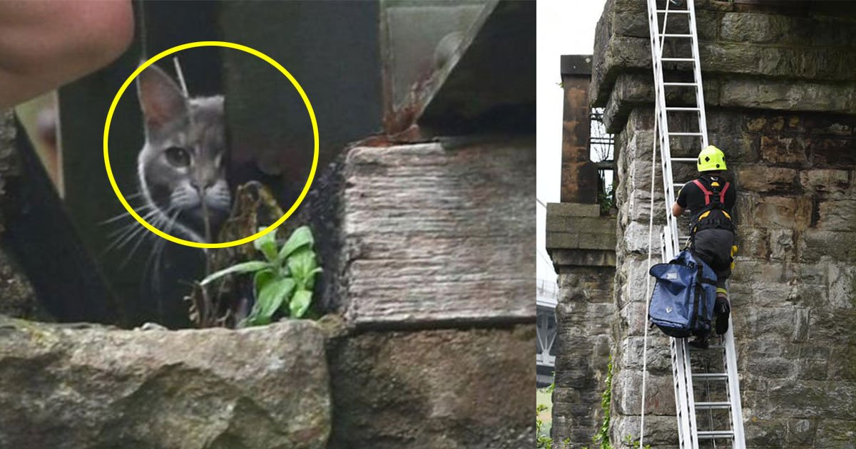 cat stuck on bridge for six days returned home after failed rescue attempts.jpg?resize=412,232 - Cat Stuck On Bridge For Six Days Returned Home On Its Own After Failed Rescue Attempts