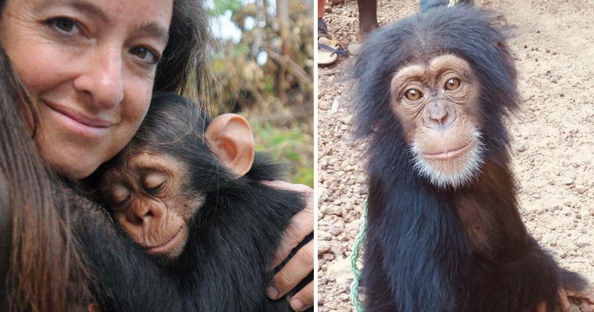 Rescue Baby Chimpanzee's Reaction When Other Chimpanzees