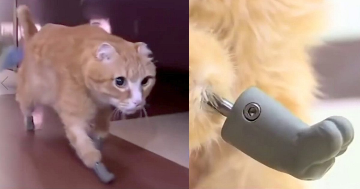 d1 5.png?resize=1200,630 - Cat Got Four Brand New Paws After Experiencing Severe Frostbite