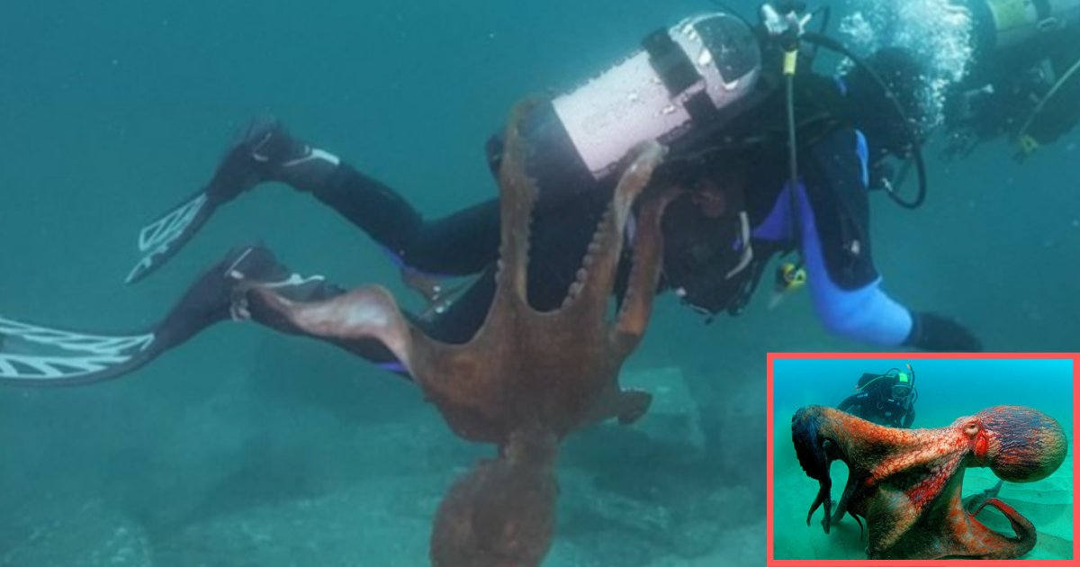 d3 10.png?resize=1200,630 - Huge Octopus Grabbed A Diver And Refused To Let Go