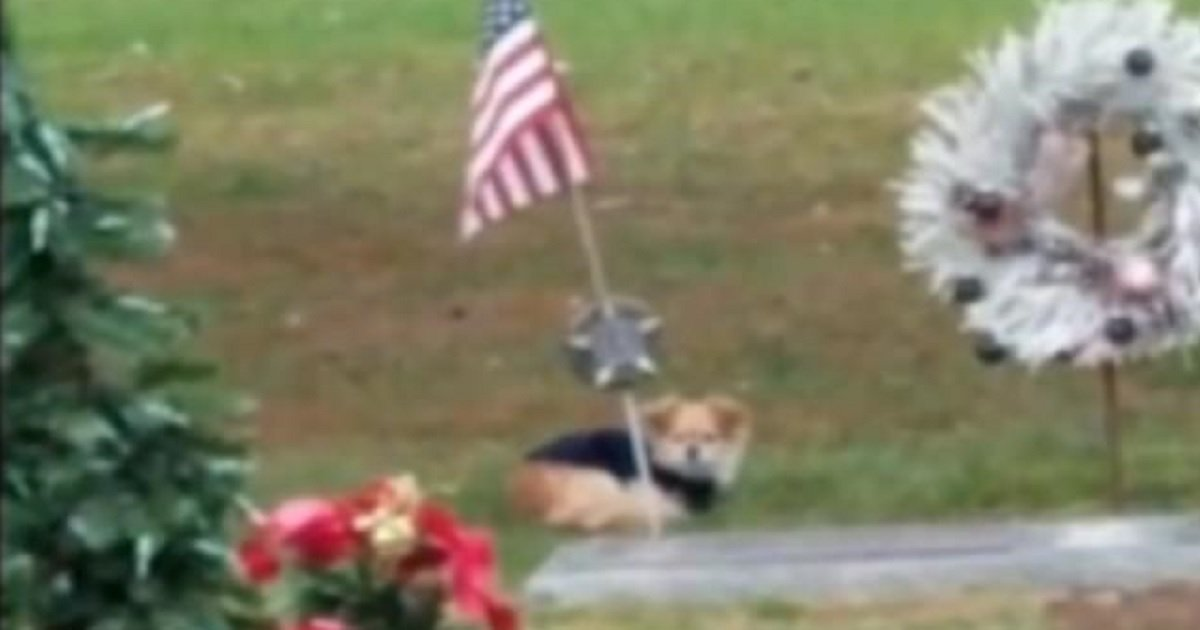 d3.jpg?resize=412,232 - A Grieving Dog Refused To Leave The Gravesite Of Her Owner Who Passed Several Months Earlier