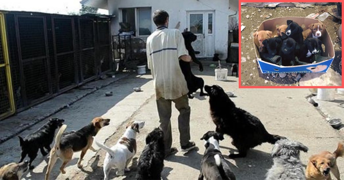 d4 2.png?resize=1200,630 - Rescuers Found 5 Puppies Instead of One During a Rescue Operation