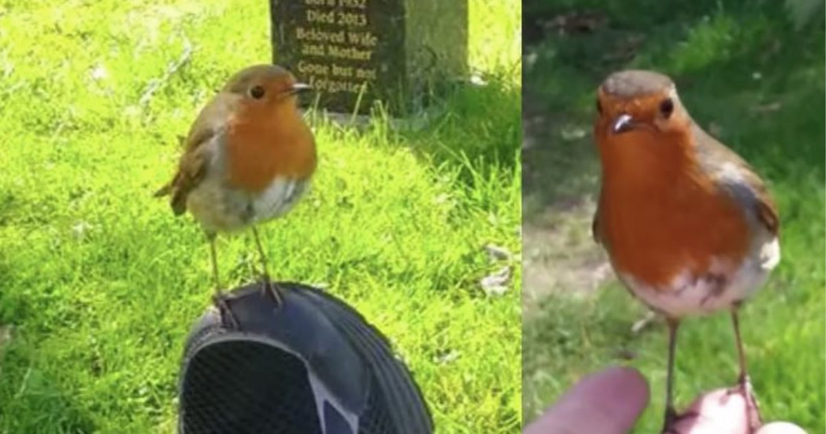 d4 3.png?resize=412,232 - A Mother Started Crying When a Wild Bird Comforted Her at Her Son's Grave