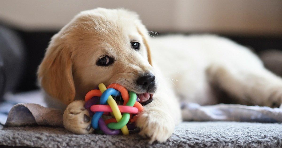 d5 1.jpg?resize=1200,630 - 11 objets dont vous devez vous débarrasser si vous avez un chien ou prévoyez d'en avoir un