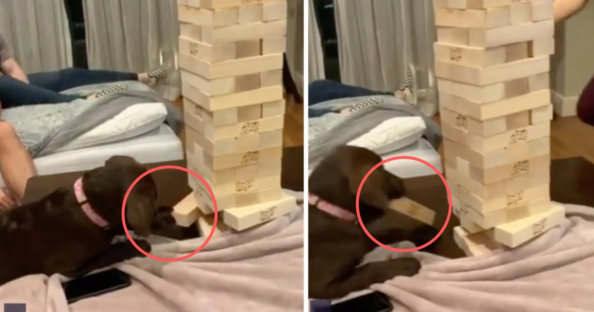 d5 14.png?resize=412,232 - The Cute Puppy Makes a Bold Move at Jenga