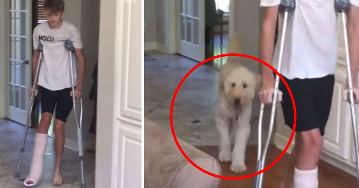 dog copies friend walk.jpg?resize=412,232 - Dog Copied The Walk Of His Friend Who Was Using Crutches After He Broke His Ankle