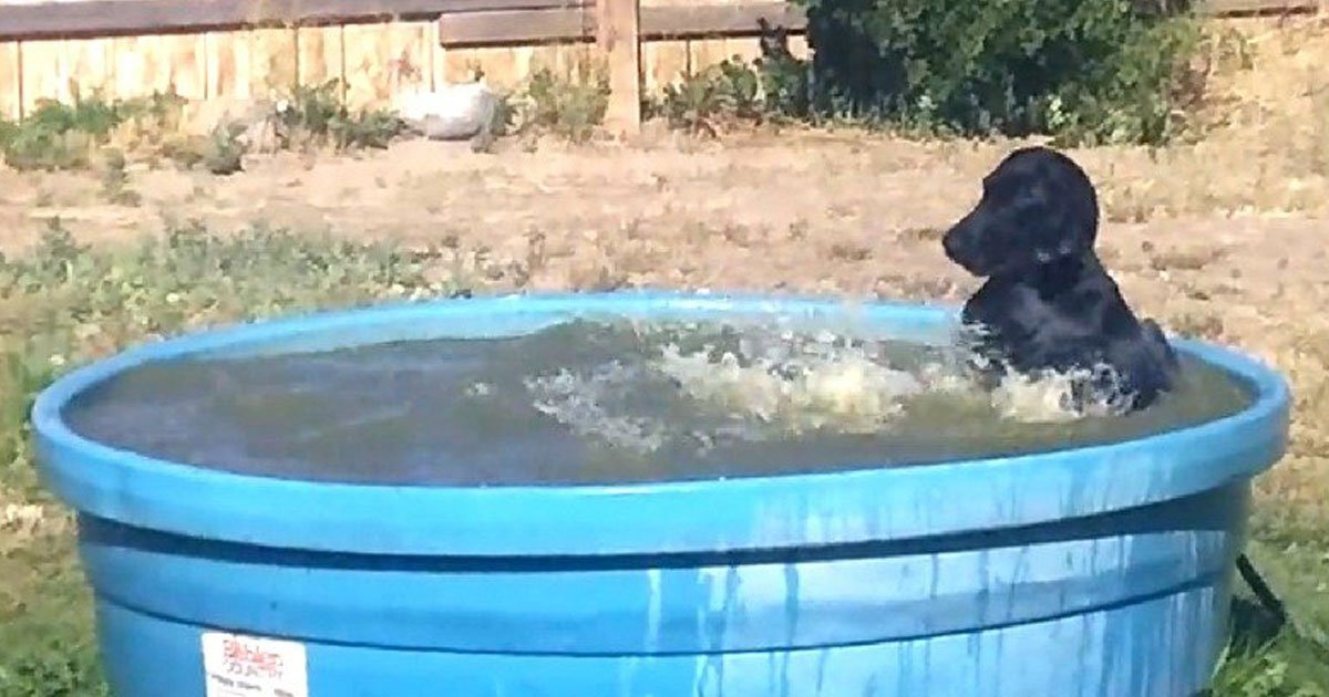 dog enjoying pool.jpg?resize=412,232 - Adorable Dog Spending Her Time In The Pool Her Owner Made For Her To Beat The Heat