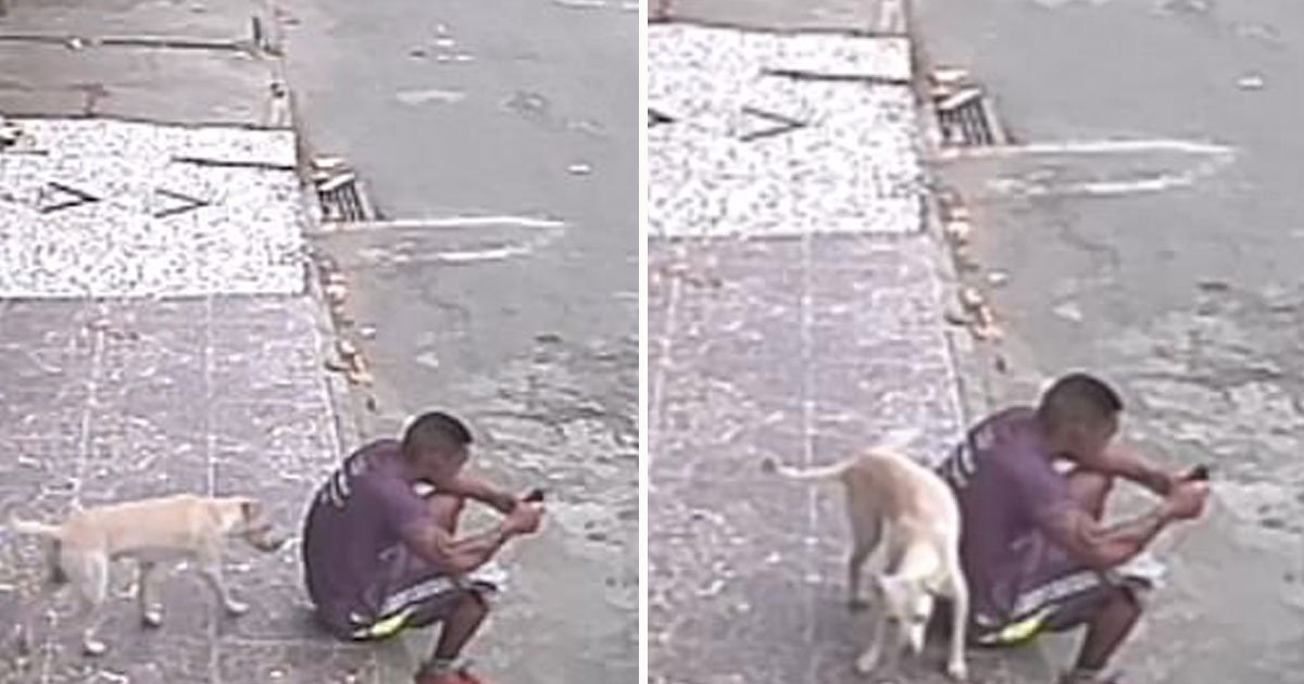 dog peed on man.jpg?resize=412,232 - Video Of A Dog Urinating On The Back Of A Man Who Was Sitting On The Pavement