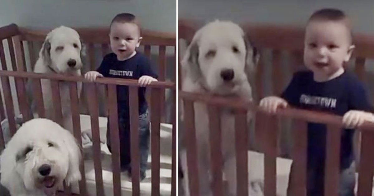 dog toddler crib.jpg?resize=412,232 - Adorable Video Of A Dog Refusing To Leave Her Best Buddy's Crib