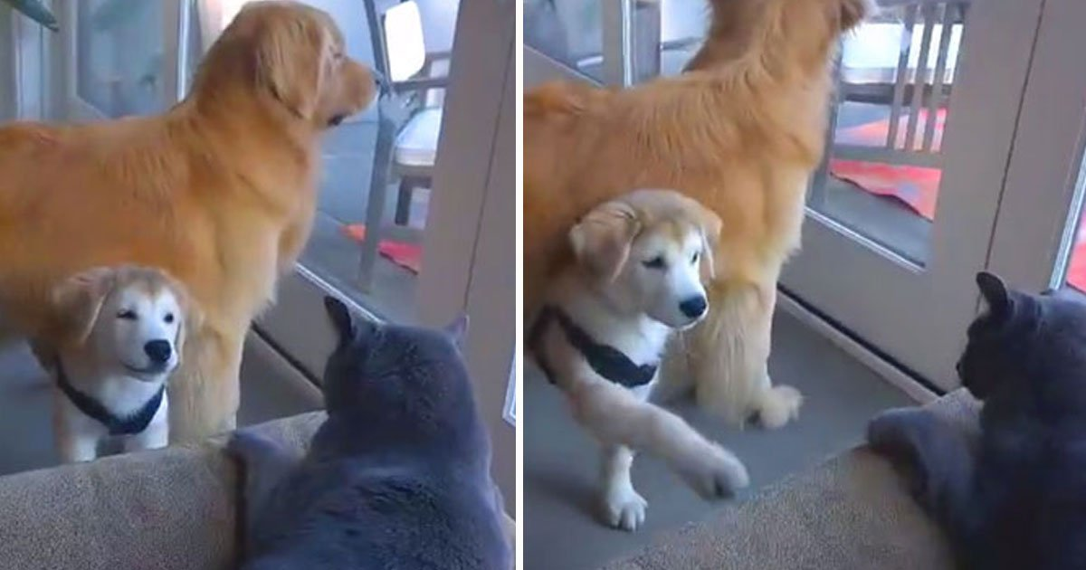 dog trying befriend cat.jpg?resize=300,169 - Adorable Dog Trying To Befriend A Cat Who Is Not Interested