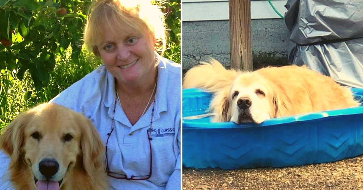 doggie.png?resize=1200,630 - Woman Behind Bars After Pushing Her 11-Year-Old Golden Retriever Into A Lake