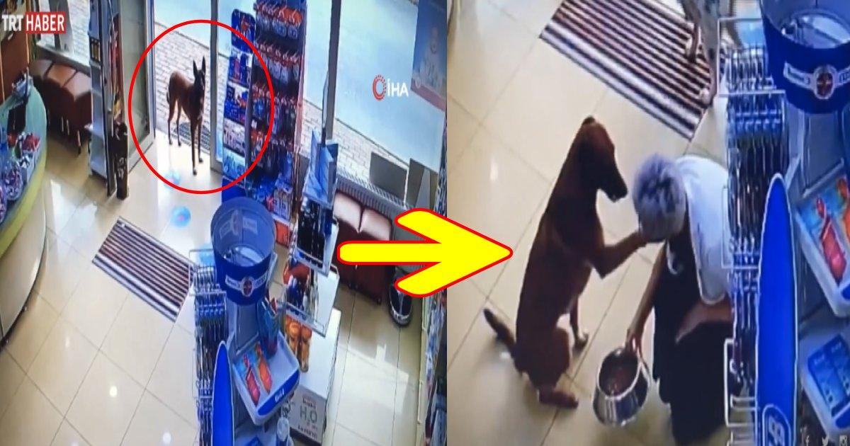 e696b0e8a68fe38397e383ade382b8e382a7e382afe38388 10 2.png?resize=1200,630 - 【動画】感動!!「助けて...」前足にケガを負った野良犬が助けを求めて薬局に訪れる!