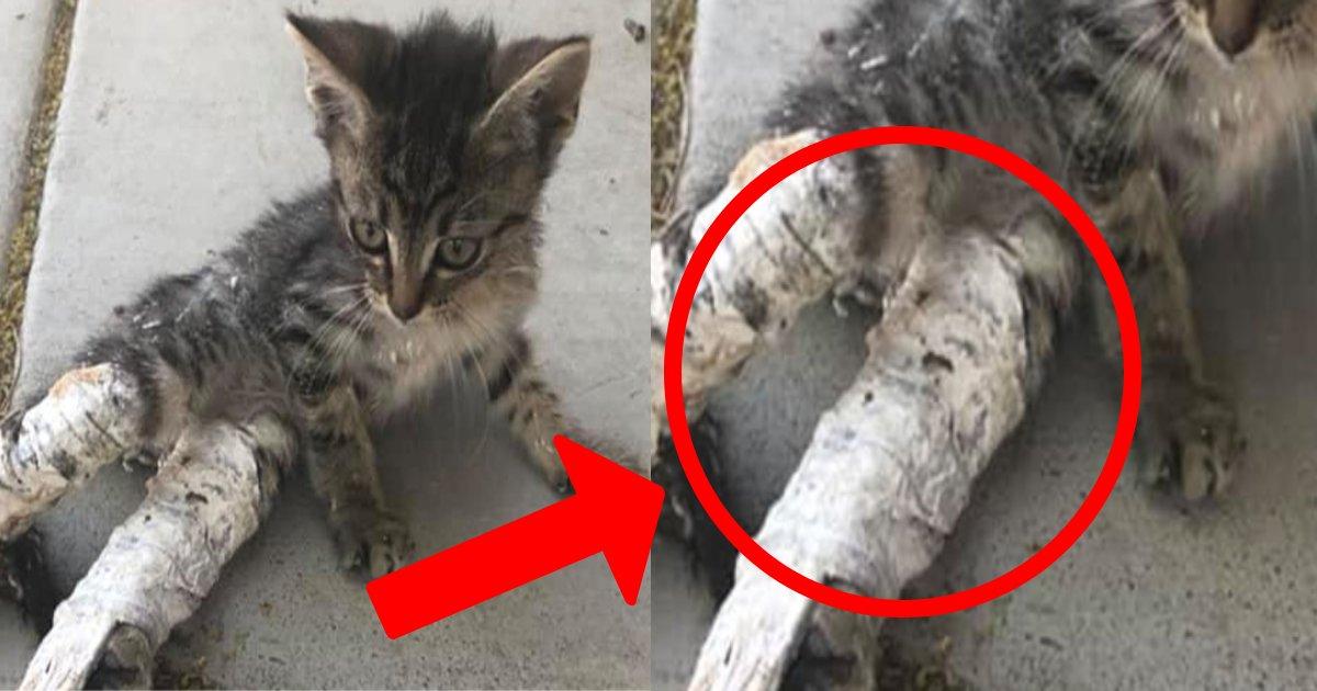 e696b0e8a68fe38397e383ade382b8e382a7e382afe38388 4 4.png?resize=1200,630 - ケガをしたのかと思ったら、その理由にショック・・・脚にギプスをはめた子猫