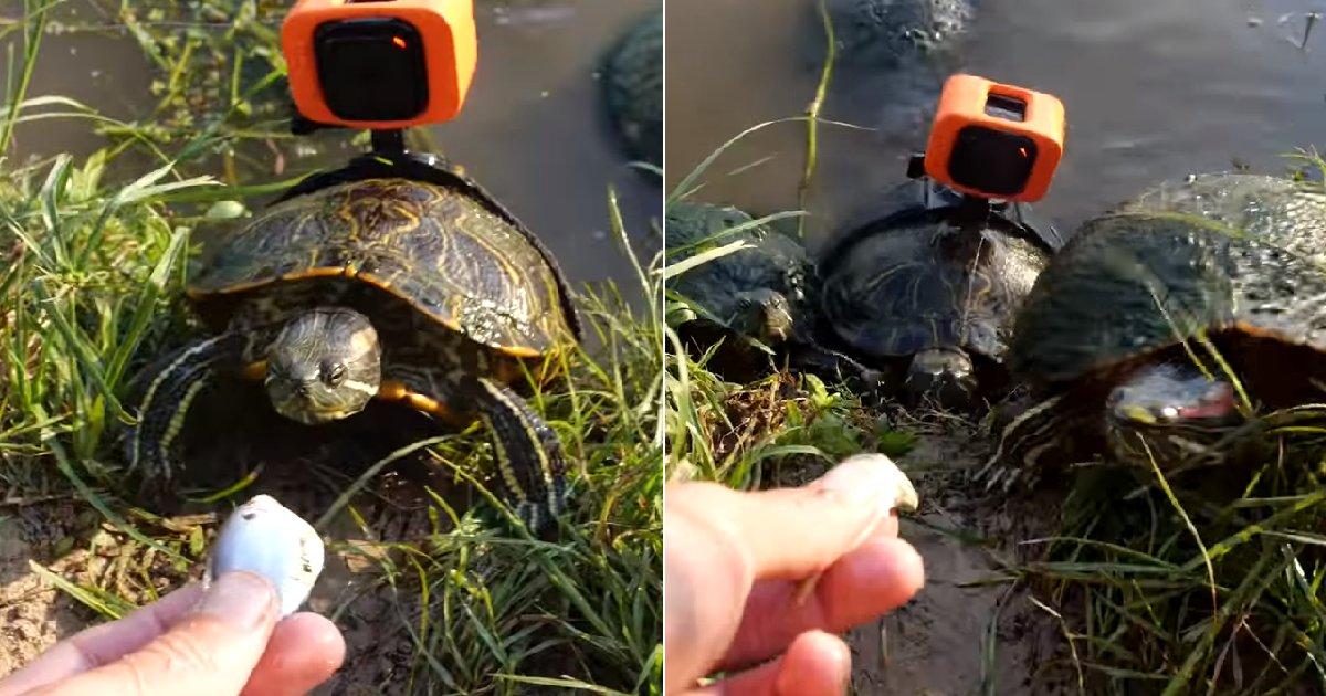 eca09cebaaa9 ec9786ec9d8c 89.png?resize=412,232 - 재빠르게 다가와 물고기 '냠냠' 받아먹는 '거북이'의 1인칭 시점 (영상)