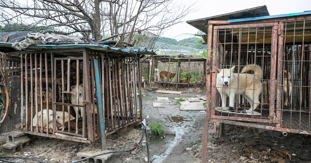featured image 14.png?resize=1200,630 - One Of The Largest Dog Meat Markets In South Korea To Shut Down In A Victory For Animal Rights Activists