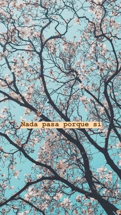 Fondo de pantalla de frases para celular; wallpaper de árbol de cerezo