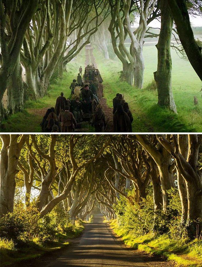 Dark Hedges, Northern Ireland - Kingsroad