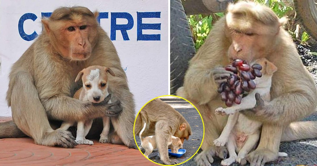 hss.jpg?resize=412,232 - Read This Amazing Story Of A Monkey Who Adopted A Puppy To Guard Against Erratic Dogs