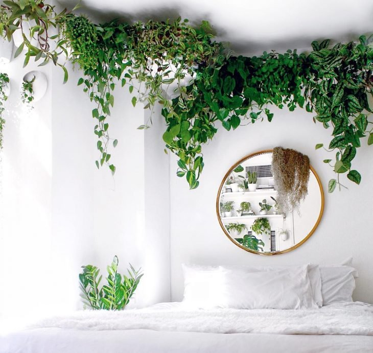Habitación con plantas verdes que decoran al rededor del techo mientras cuelgan y se reflejan en un espejo redondo