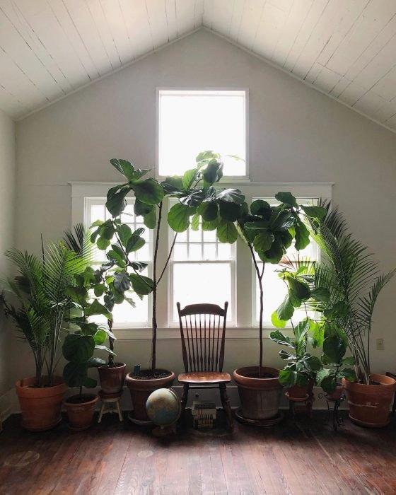 Habitación para lectura decorada con diferentes tipos de plantas grandes que forman un arco. En medio se encuentra una silla