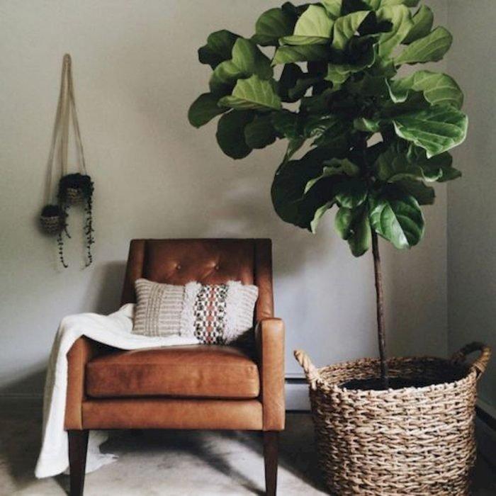 Sillón que se encuentra en medio de una sala de estar en la que hay una planta grande dentro de un cesto de palma