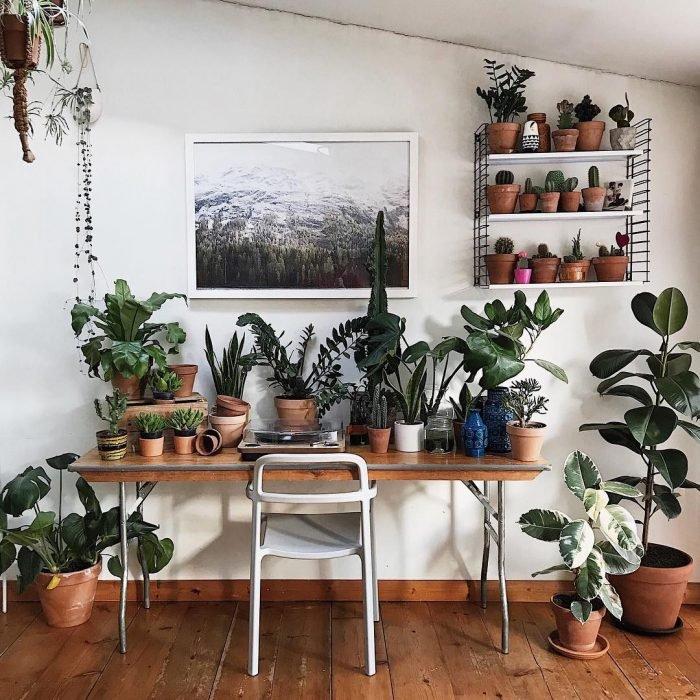 Habitación decorada con plantas de diferentes tipos que están distribuidas entre el escritorio, la pared y el suelo
