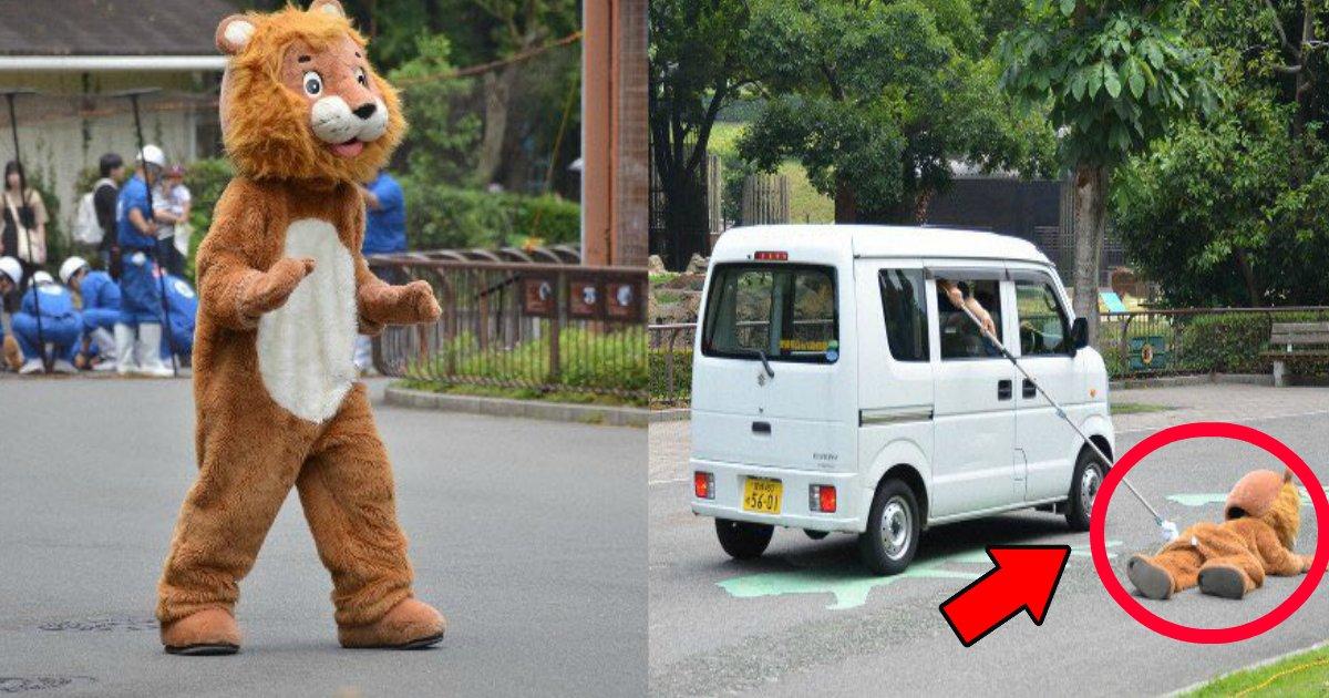 lion.png?resize=1200,630 - 愛媛の動物園のライオン捕獲訓練がツッコミどころ満載?「誰が見ても人じゃん」