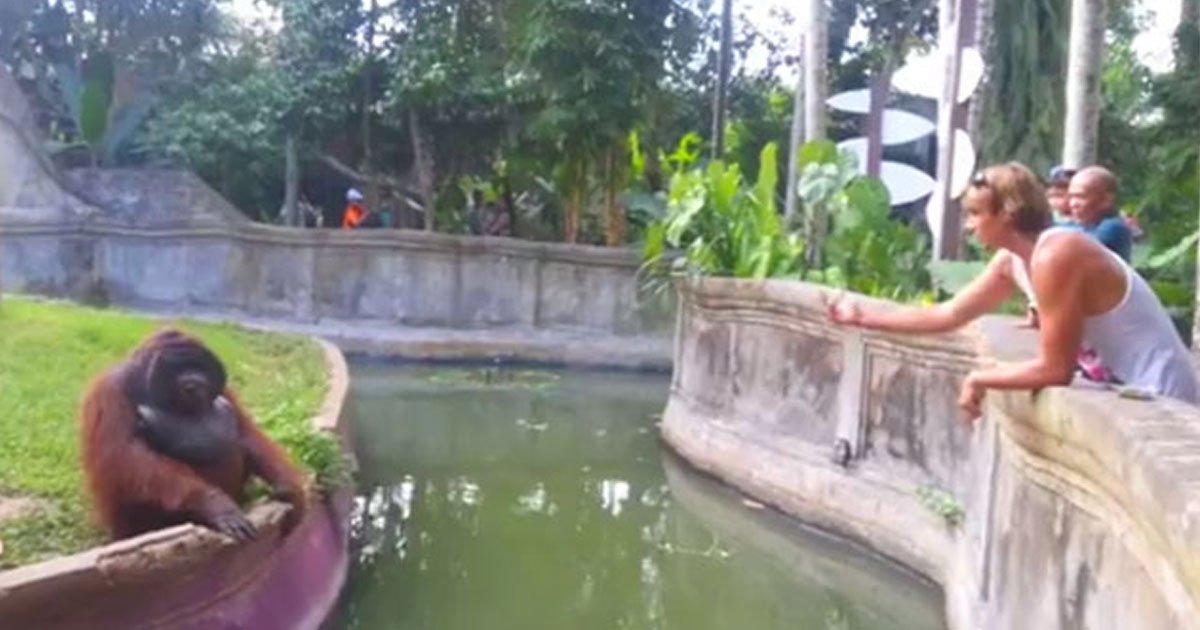 man orangutan treat throw.jpg?resize=412,232 - Man Threw A Treat Into The Orangutan Habitat At A Zoo - What The Orangutan Did Next Was Unexpected