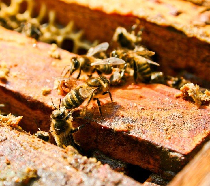 Morgan Freeman convirtió su rancho de 50 hectáreas en un santuario de abejas para salvar al planeta