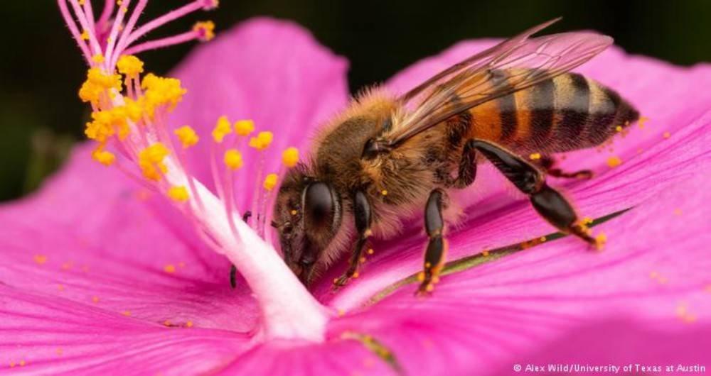 Resultado de imagen de abejas