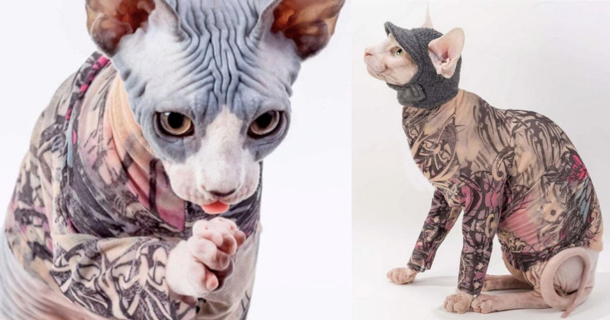 s1 16.png?resize=1200,630 - Tattooed Sleeves For Cats Are A Now A Thing