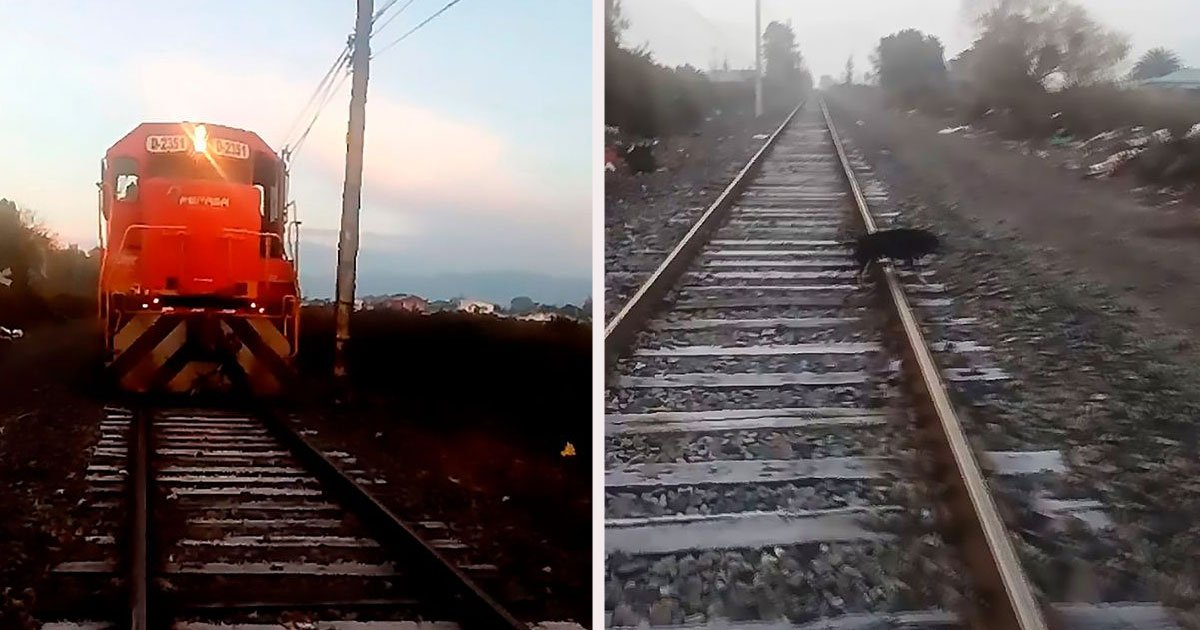 untitled 1 61.jpg?resize=412,232 - Heroic Conductor Stopped The Train Just In Time To Save A Dog That Was Chained To The Railroad Tracks