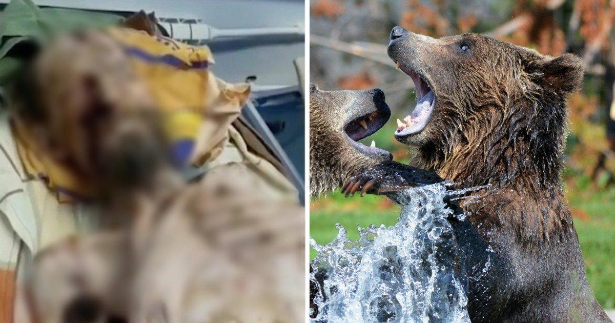 """untitled 68.jpg?resize=412,232 - """"생존 기적"""" 곰에 납치돼 한달만에 극적 구조된 남성 (사진주의)"""