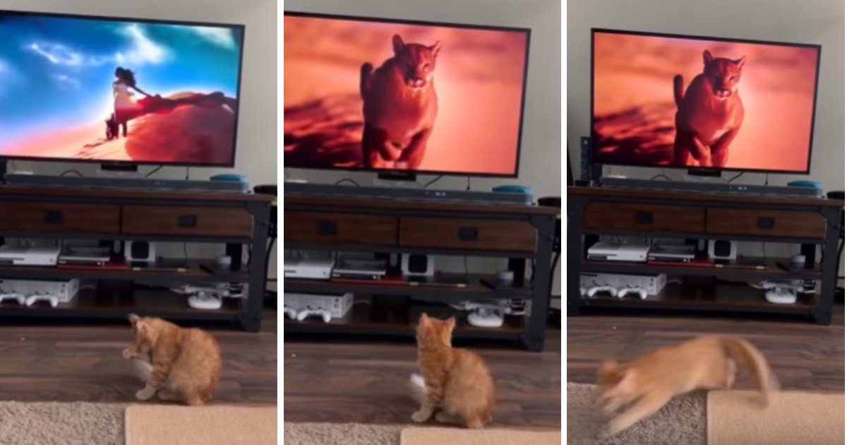 untitled design 53.png?resize=412,232 - Cat Freaks Out As Giant Puma Appears On TV While He Is Minding His Own Business