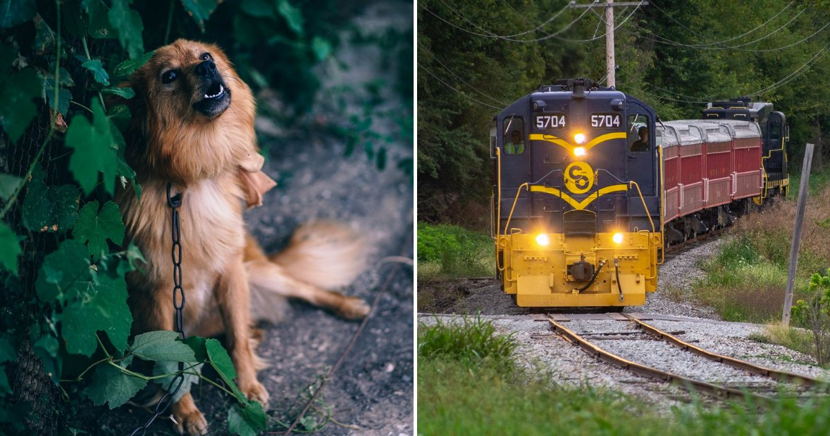 untitled design 99 1.png?resize=412,232 - Un conducteur de train remarque un chien enchaîné à côté de la voie ferrée, il arrête le train et le sauve