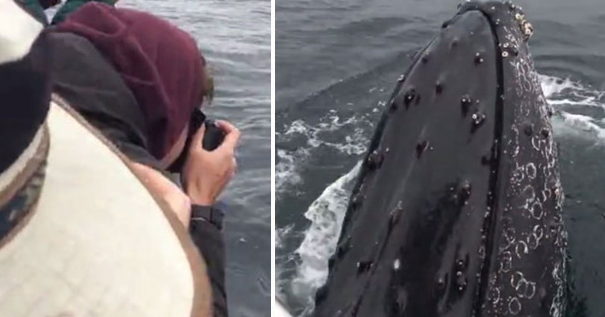 whales encounter.jpg?resize=412,232 - Two Humpback Whales Approached A Boat And Spent Two Hours With The People On Board