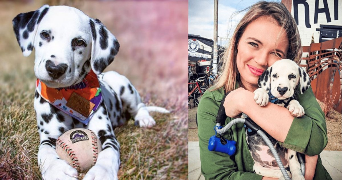 y3 8.png?resize=300,169 - Dalmatian Puppy With A Heart-Shaped Nose Has More Than 130K Followers
