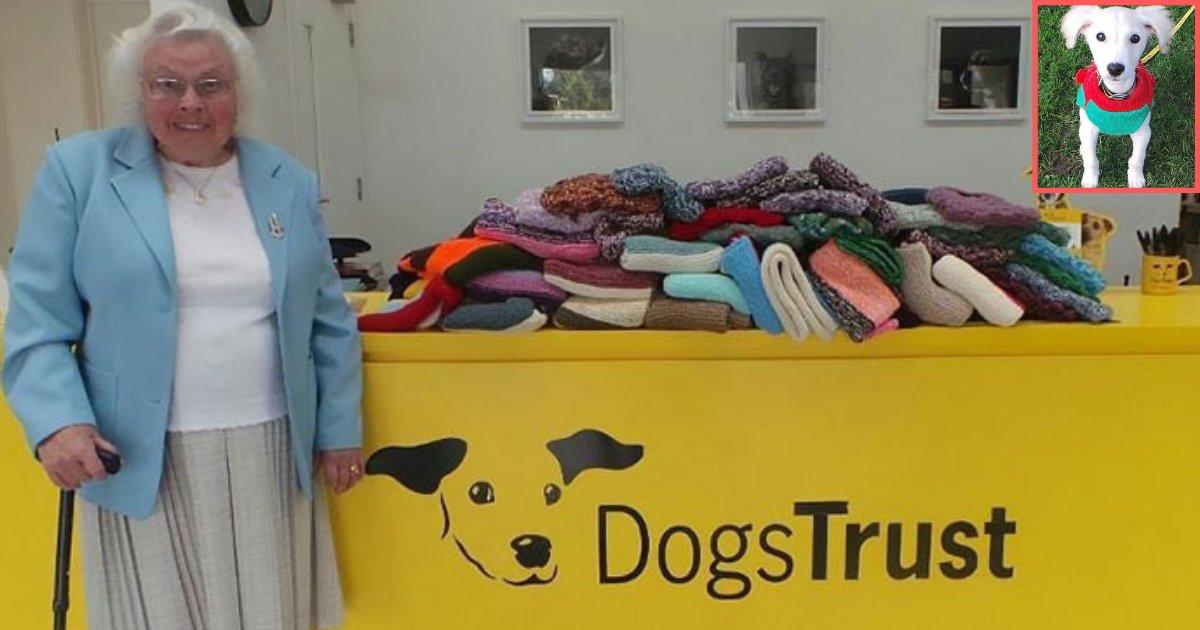 y6.png?resize=300,169 - Une femme de 89 ans tricote 450 couvertures pour des chiens de refuge