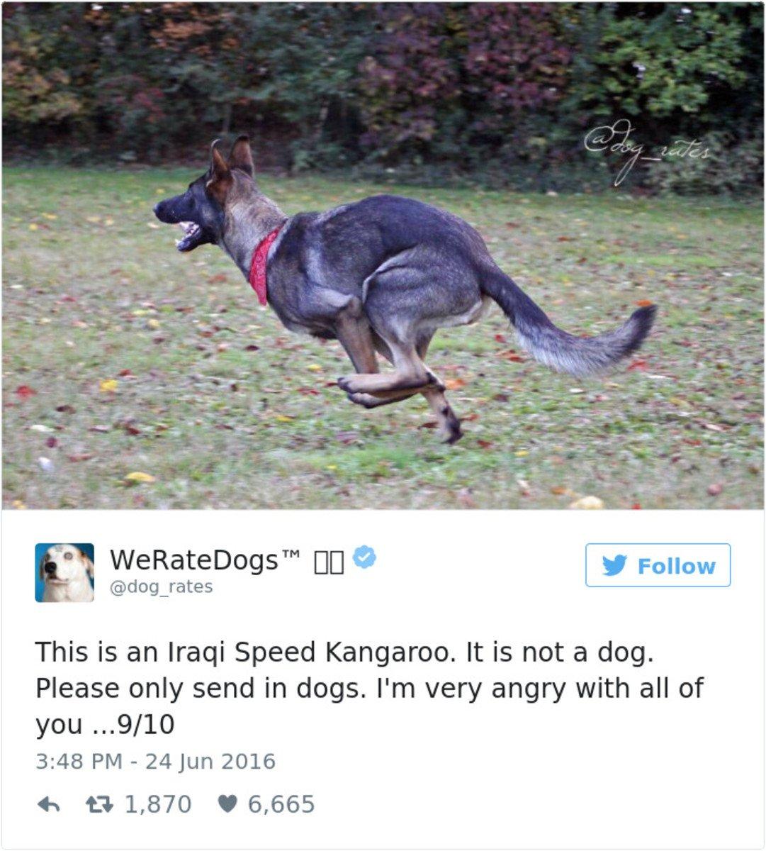 @dog_rates