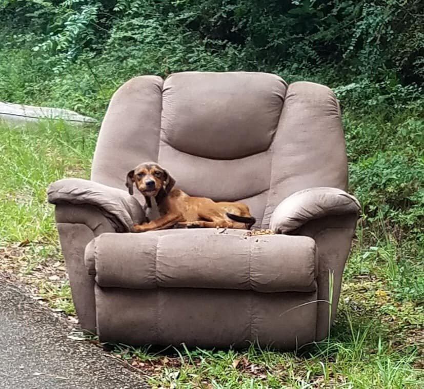 تصویر میں یہ شامل ہو سکتا ہے: بیٹھے ہوئے لوگ اور کتا