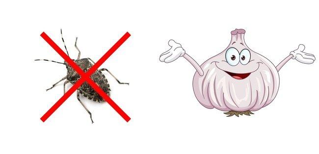 10Maneras deevitar cualquier plaga oinsecto entucasa