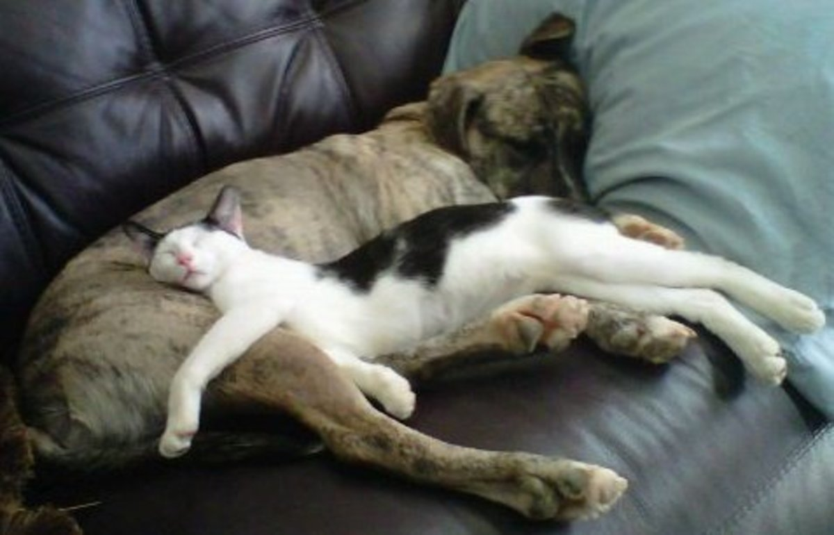 sleeping dog pillow 10