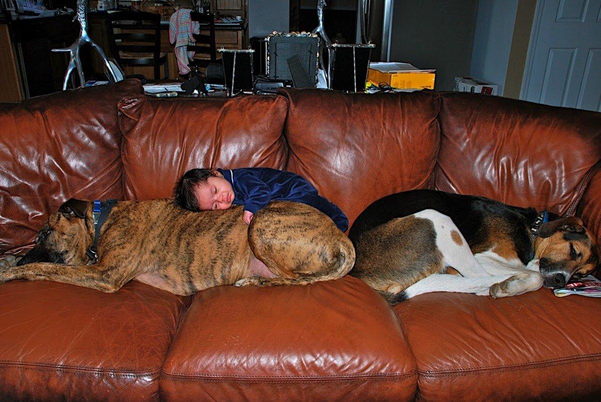 sleeping dog pillow 11