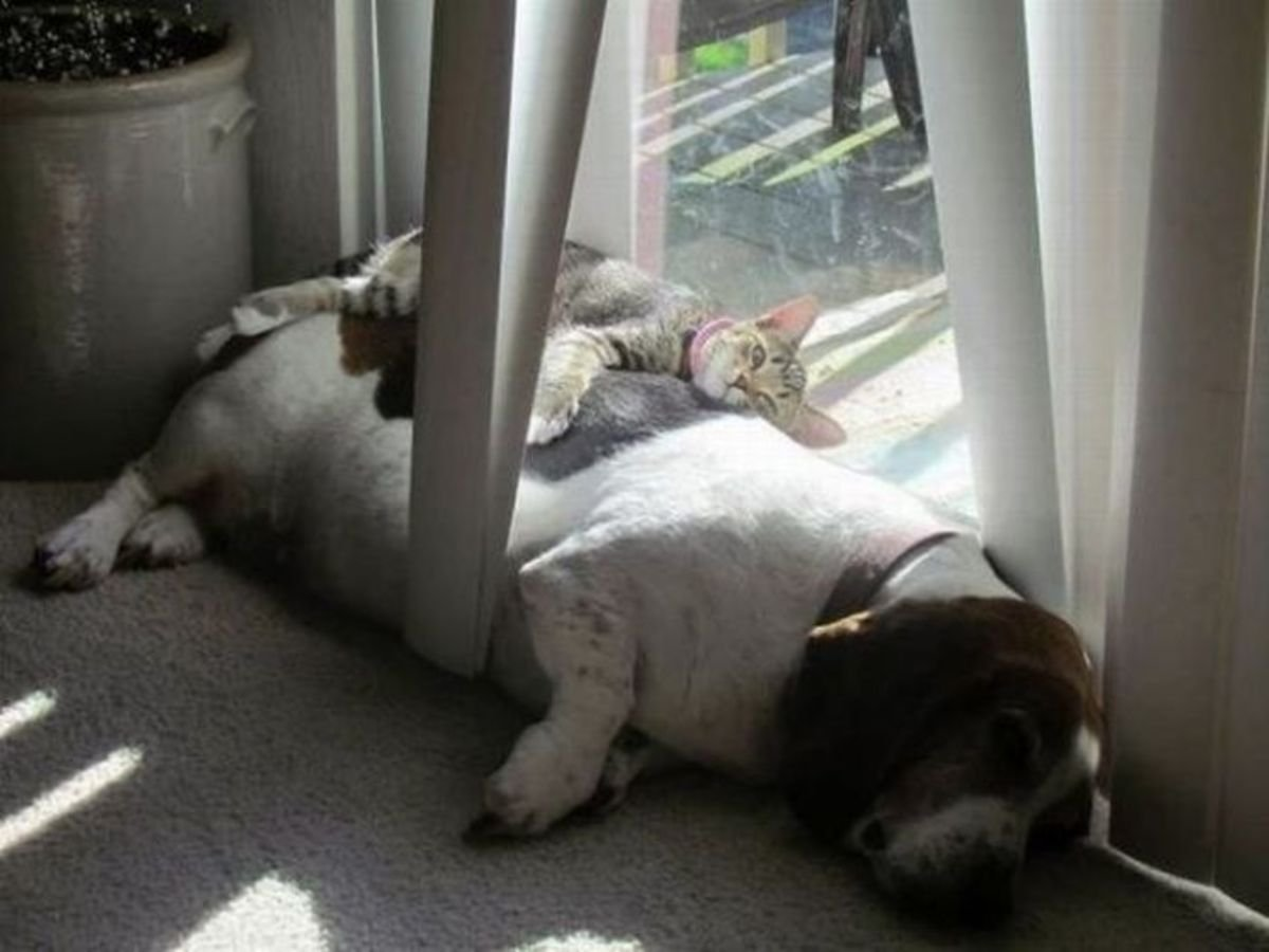 sleeping dog pillow 12