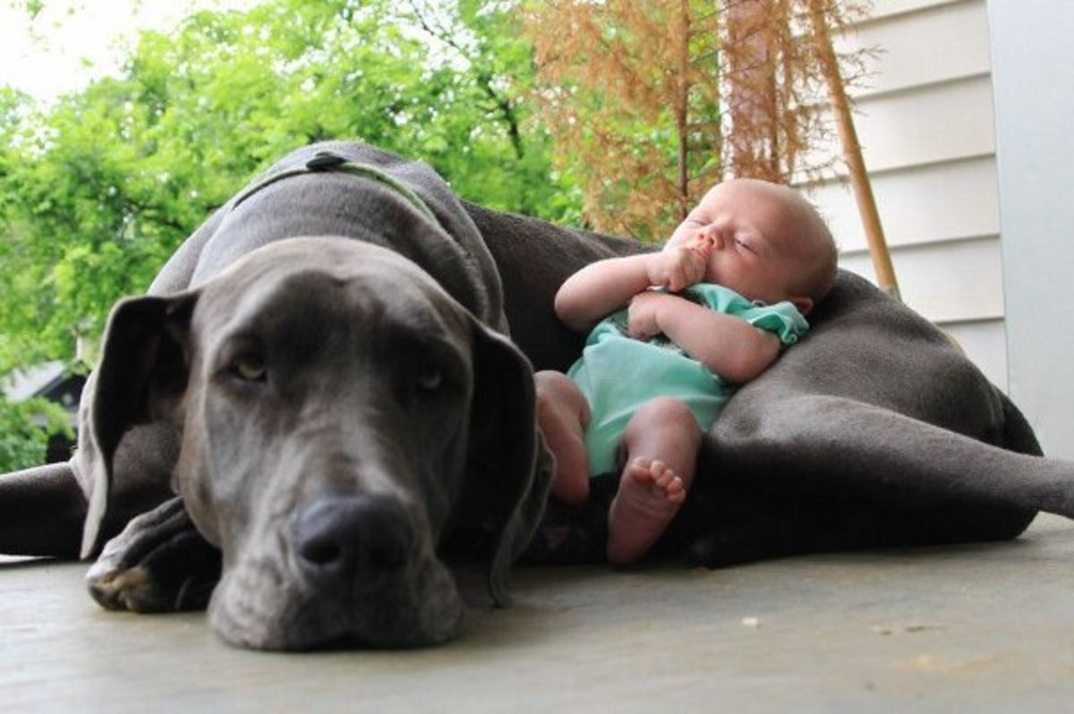 sleeping-dog-pillow-13