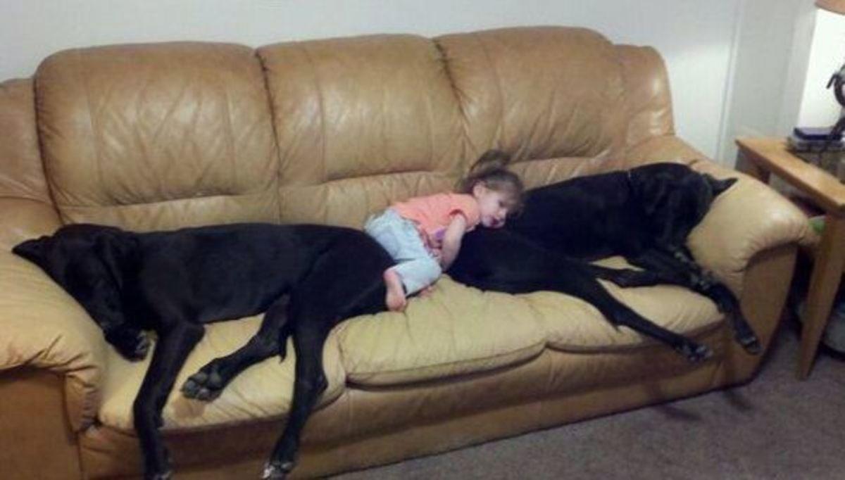 sleeping dog pillow 15
