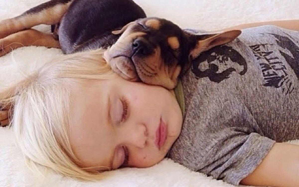 sleeping dog pillow 16