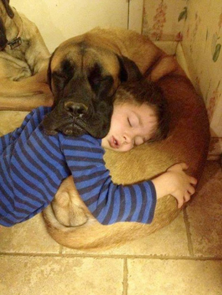 sleeping dog pillow 1