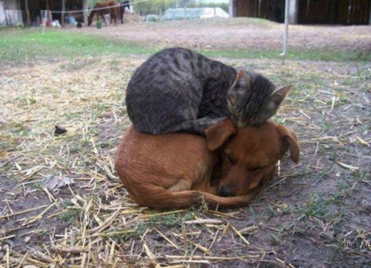sleeping dog pillow 2