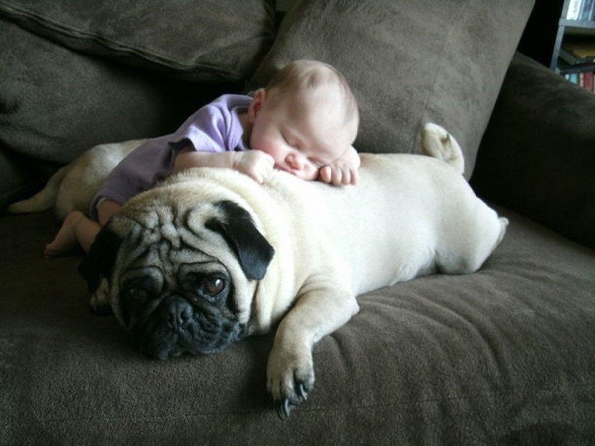 sleeping dog pillow 3